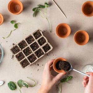Почва и грунт для растений