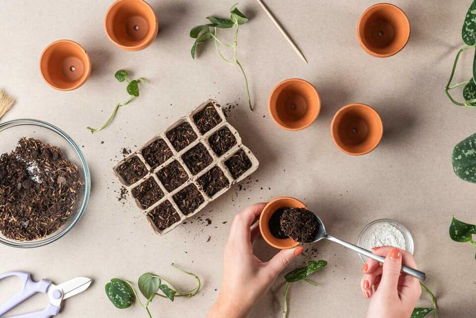 черенкование, размножение растений, как размножать растения, размножить растение, как черенковать, как правильно черенковать, укоренитель